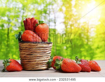 Ripe Sweet Strawberries In Wooden Basket. Summer Harvest. Gardening Concept.