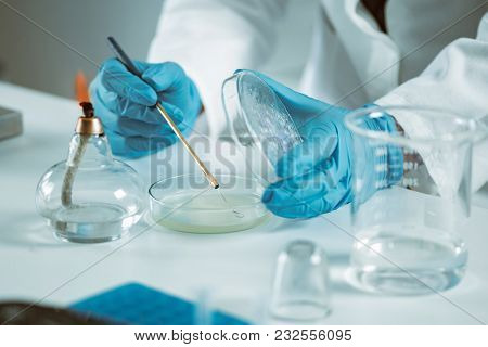 Microbiology Laboratory Work