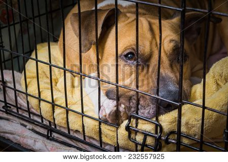 A Trapped Dog In A Cage Lies On A Bed