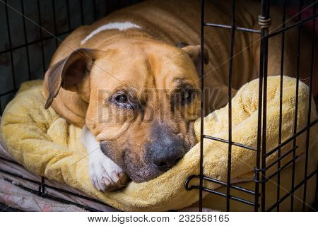 The Dog Sleeps On Its Bed In A Cage