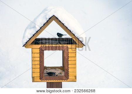 Birds Sits On Feeder Covered Snow In Winter Forest