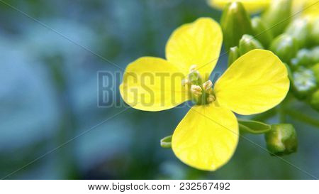 Yellow Flower On A Blue Background Blurred Background Magnified Macro Photo