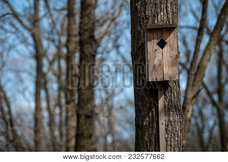 Old Nesting Box For Birds In Utumn Forest On Tree Trunk