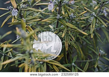 Silver Monero Rosemary