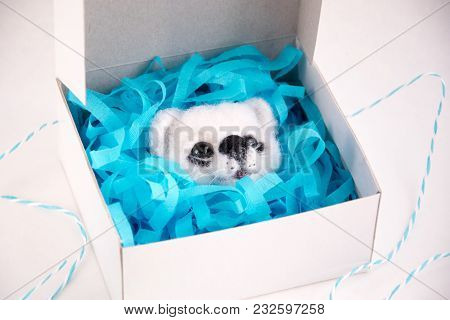 Wool Toy Stuffed White Pet Dog Needle Felted.