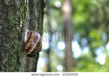 Snail On The Tree