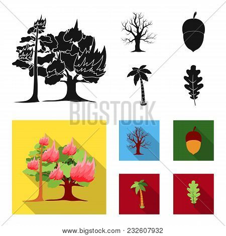 Burning Tree, Palm, Acorn, Dry Tree.forest Set Collection Icons In Black, Flat Style Vector Symbol S