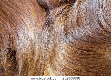 Background Idea Of Brown Long Dog Fur For Pet Concept