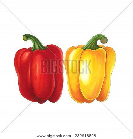 Pepper On A White Background. Sketch Done In Alcohol Markets. You Can Use For Greeting Cards, Poster