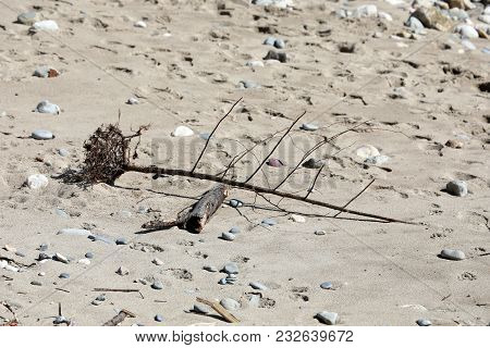 Dead Tree And Dry Branches On The Sand Of The Beach