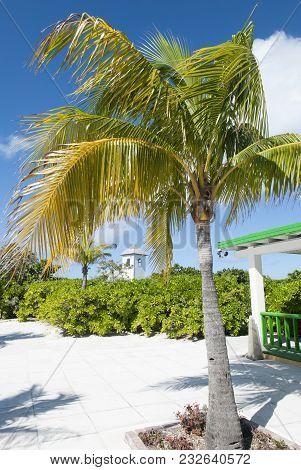 The Leaning Palm In A Tourist Village On Otherwise Uninhabited Island Half Moon Cay (bahamas).