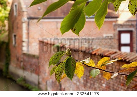 Branch Of A Tree With The Background Of Historic Buildings In Groot Begijnhof Of Leuven. Is A Well P