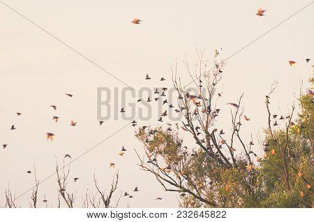 Flock Of Birds Flying