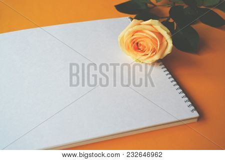 White empty paper and a soft cream flower rose on orange background.