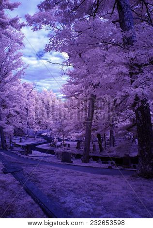 Infrared Image Changing The Colors Of This Landscape.