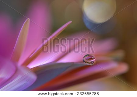 Abstract Macro Photo With Water Drops.artistic Background For Desktop. Flowers Made With Pastel Tone