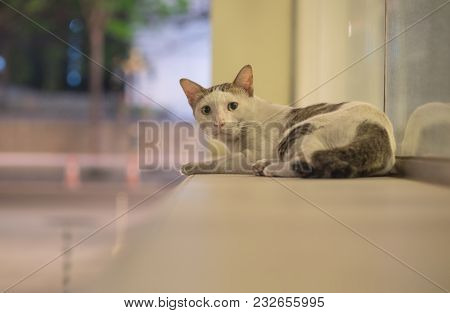 A Stray Cat Feel Afraid And Be Careful While Sitting And Look At Shooting From Camera In The Night T
