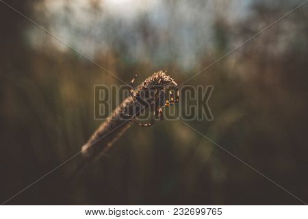 Spider In The Natural Habitat. Nature Of Russia, Moscow Region