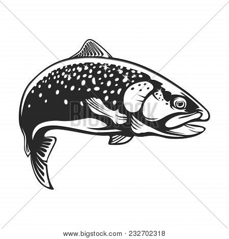Realistic Drawing Of The Rainbow Trout Jumping Out Water.sketch Isolated On White Background. Concep