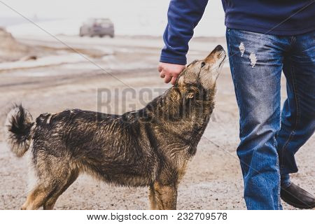Kindness And Trust Of A Stray Dog To A Stranger