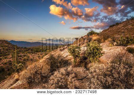 Sunset Over Cholla And Cactuses Near Javelina Rocks In Saguaro National Park East Near Tucson, Arizo