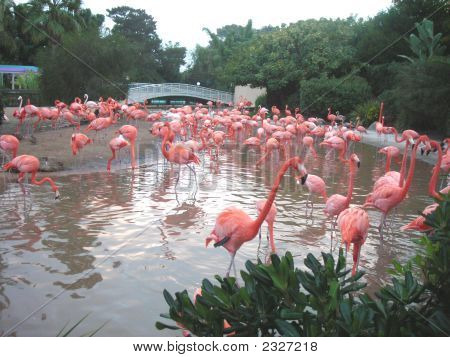 Pond Of Flamingos