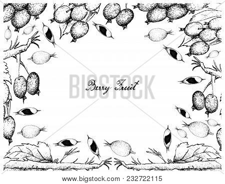 Berry Fruits, Illustration Frame Of Hand Drawn Sketch Delicious Fresh Black-berries And Black-berry
