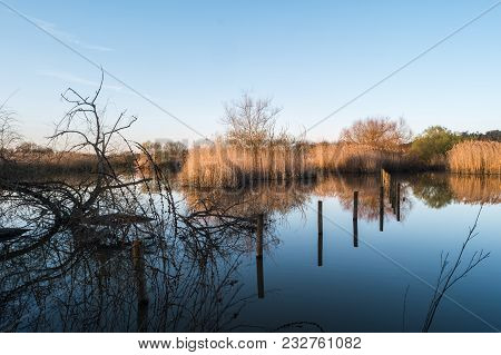 Water Reflections Of Lagoon Park Of Pateira De Fermentelos,portugal.