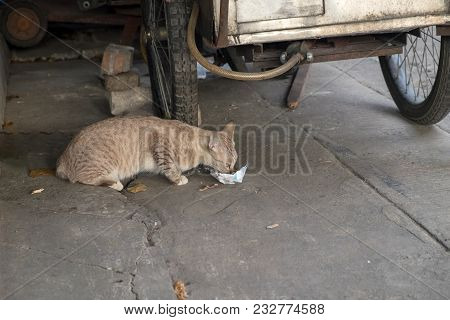 Stray Cat Eating Food That People Put On The Road