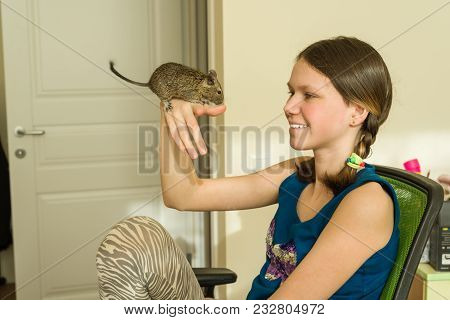Teenage Girl Holding A Pet On Her Hand - Chilean Squirrel Degus, Love And Care For Pets