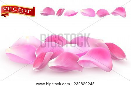 Collection Of Pink Rose Petals Close-up On White Background. Vector Editable Elements To The Day Of