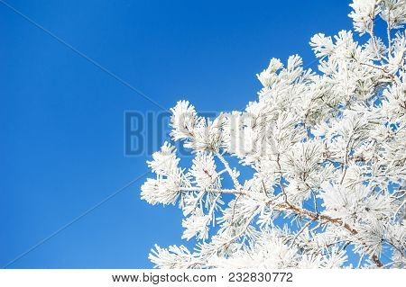 Trees In Hoarfrost Against The Blue Sky. Selective Focus. Beautiful Winter Landscape.