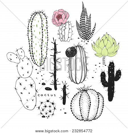 Print Of Abstraction Doodle Cactuses, Vector Floral Illustration On White Background.