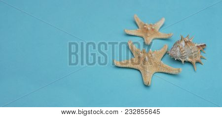 Starfish And Seashells, Maritime Nautical Decoration Over Blue Background With Copy Space. Banner