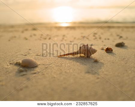 Sea Shells On Sand Beach At Sunset In Summer Day.