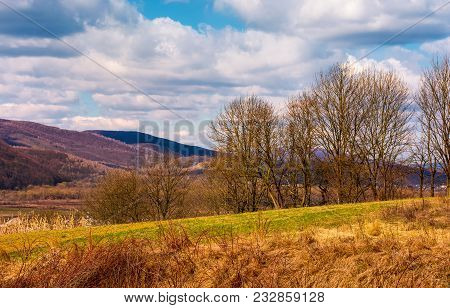 Orchard In Mountainous Rural Area. Lovely Countryside Springtime Scenery. Leafles Trees On Grassy Me