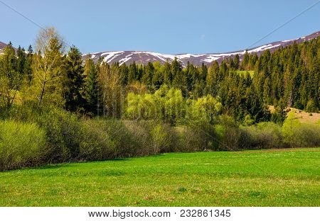Grassy Meadow Among The Forest. Lovely Springtime Nature In Mountains