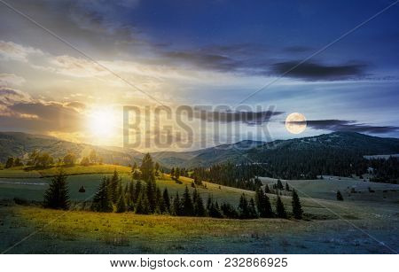 Time Change Over The Countryside Summer Landscape. Spruce Trees On A Rolling Grassy Hills At The Foo