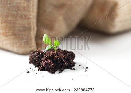 Young Sprout With A Soil Lump Close Up Against The Background Of The Filled Bags. Green Sprig In The