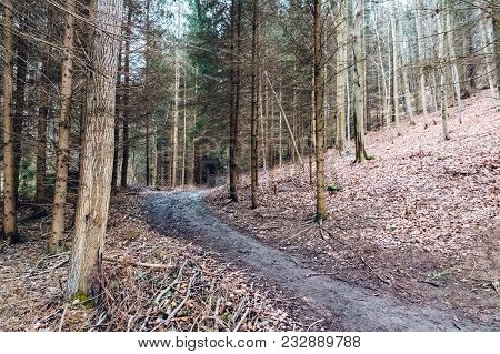 Forest Hiking Trail In A Deep Forest. On The Hillside