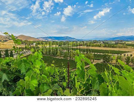Napa Valley, Ca Usa - 08/06/2013 -   Napa Valley Vineyards