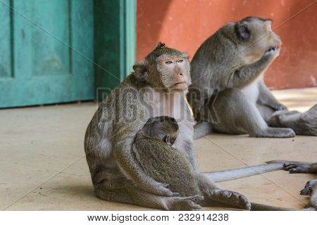 Monkey With Her Baby In The Cambodian Jungle At The Temple Of Wat Leu Sihanoukville Cambodia