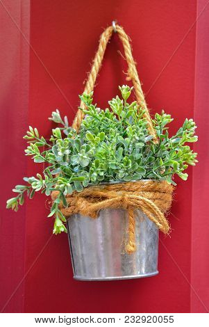 Green Plant In The Metal Bucket.  Green Plant Decorating Red Wall. Decorative Green Plant In The Met