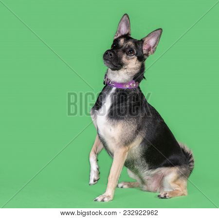Funny Dog Mongrel On A Green Background
