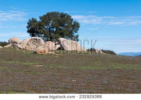 Boulders Surround A Single Tree At Ramona Grasslands Preserve In San Diego, California.