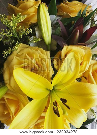 Flower in garden at sunny summer or spring day. Flower for postcard beauty decoration and agriculture concept design. Beautiful flower in tropical garden. Colorful flower. flower pattern. flower background. flower bouquet. flower garden.