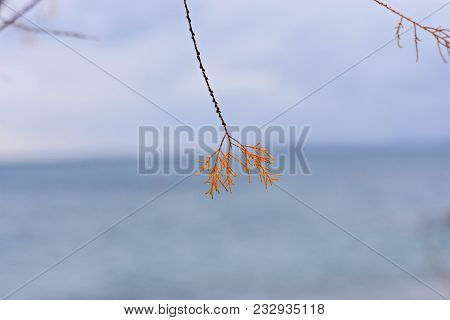 Focusing On Blowing Branches Grass On Windy Day Whit Blue Sea As Background