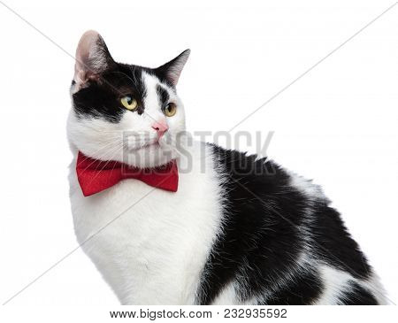 close up of a classy cat looking to the side while sitting on a white background