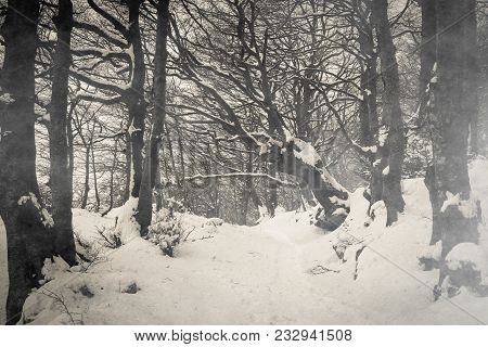 Path On Gothic Forest With Snow Of Monte Cucco In Umbria