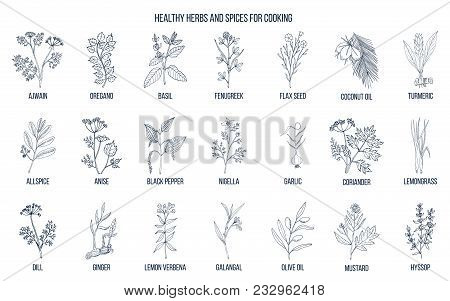 Hand Drawn Set Of Culinary Herbs And Spices. Vector Illustration.